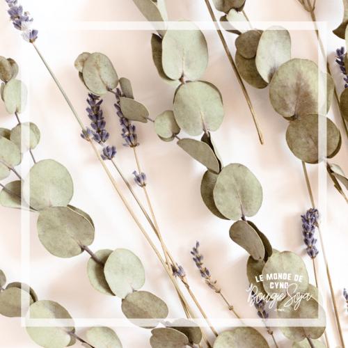 ucalyptus et lavande-chandelle de soya-percé-verre