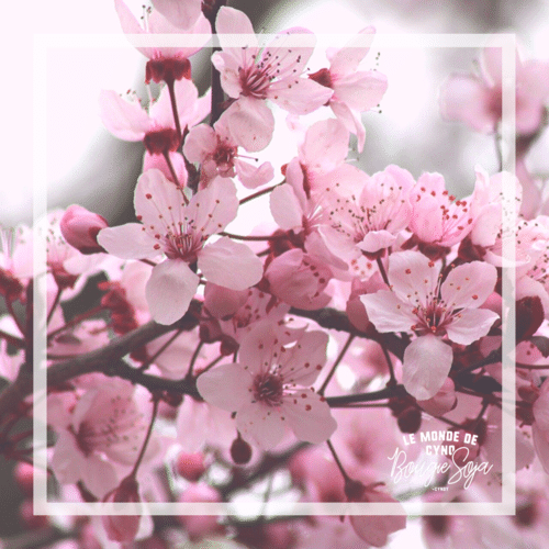 Fleur de cerisier japonais-chandelle de soya-percé-verre