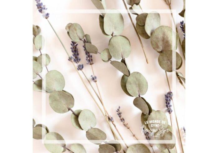 Bougie Eucalyptus et lavande