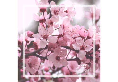 Bougie fleur de cerisier japonais